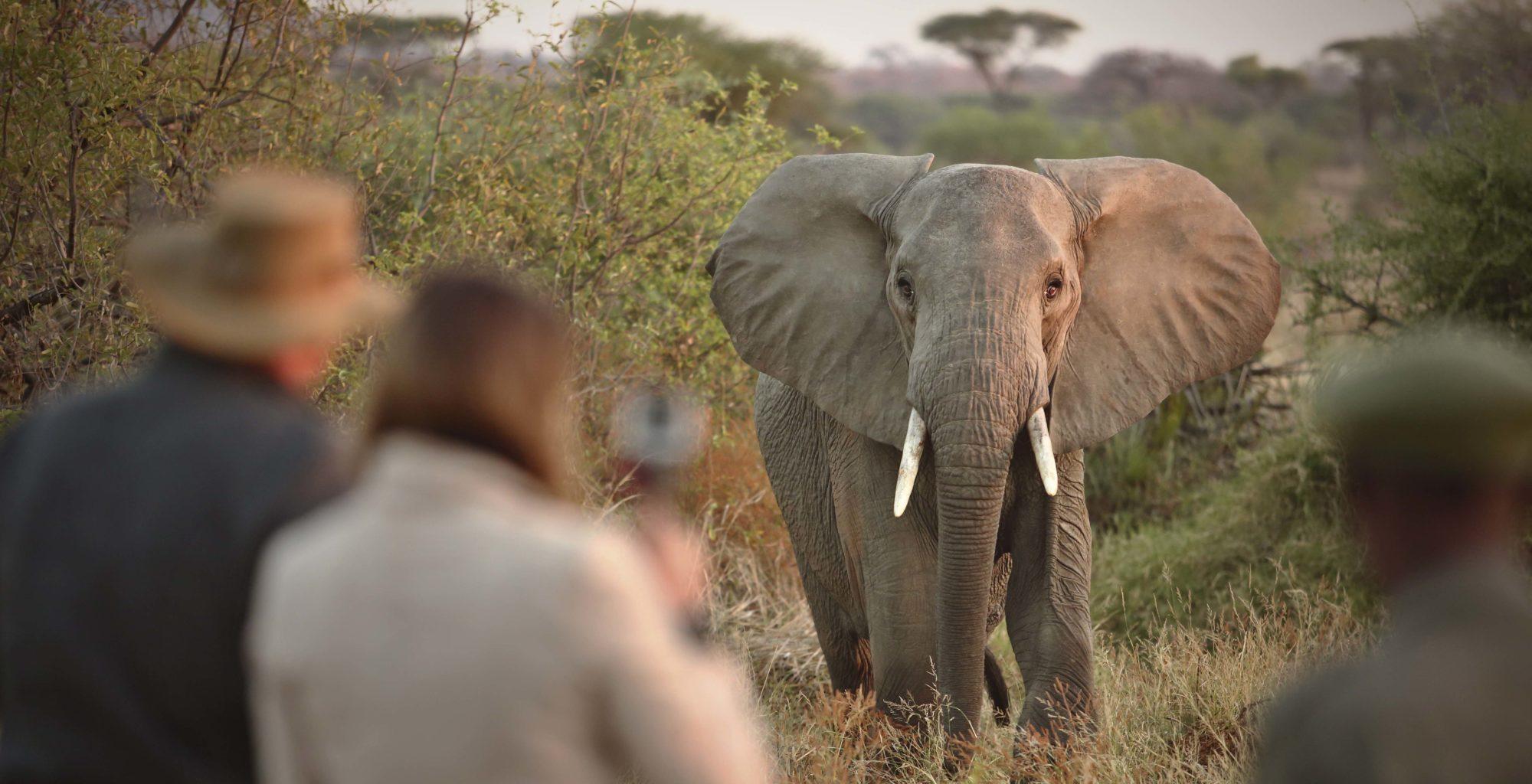 Kichaka Camp Tanzania Elephant