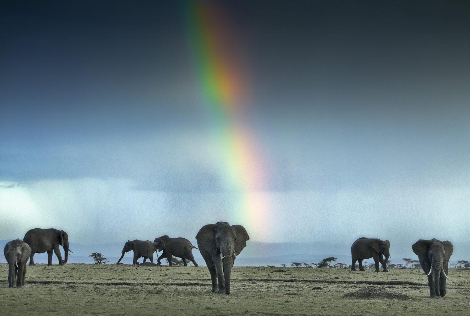 Mara Toto Kenya Wildlife