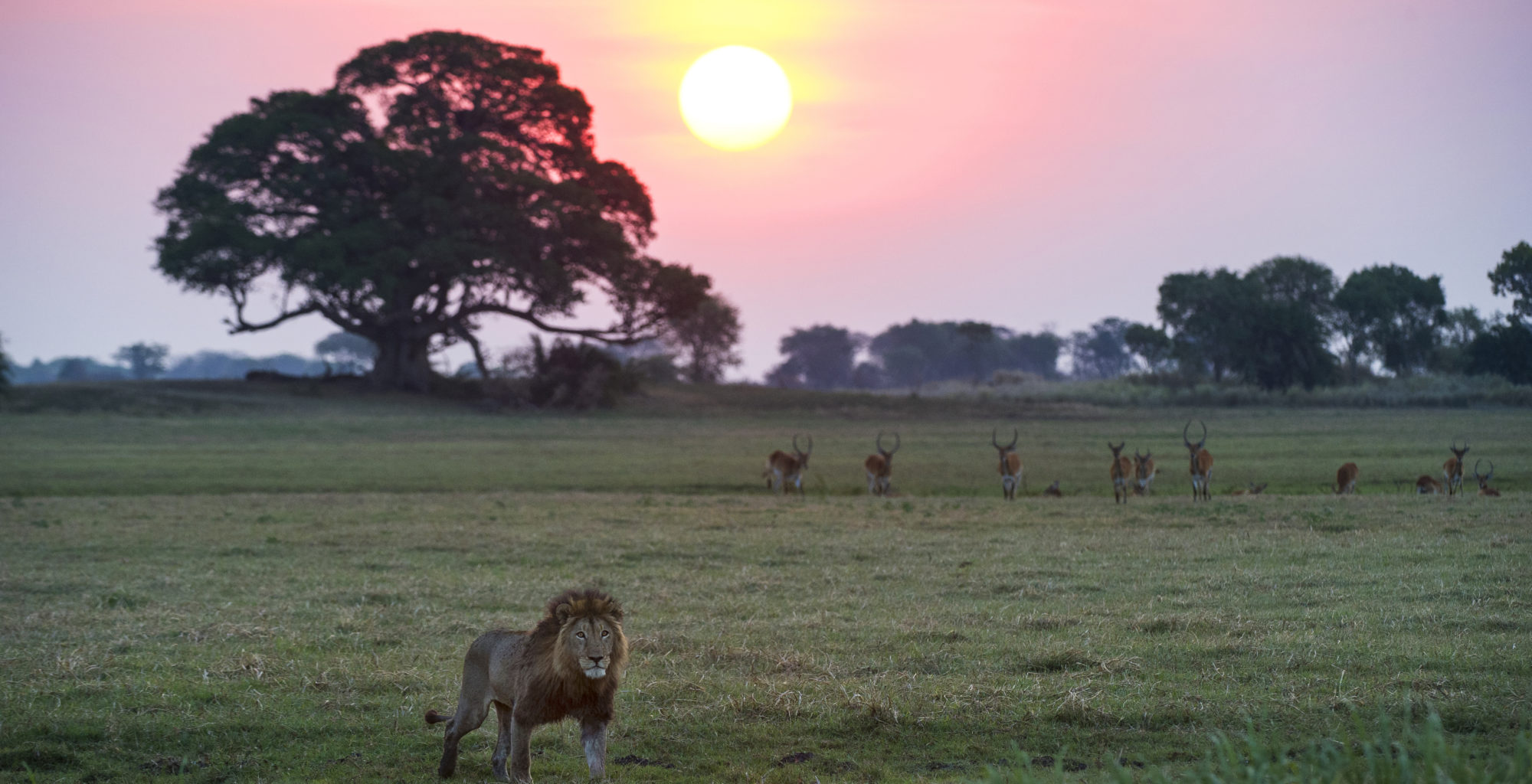Kafue National Park Area Image