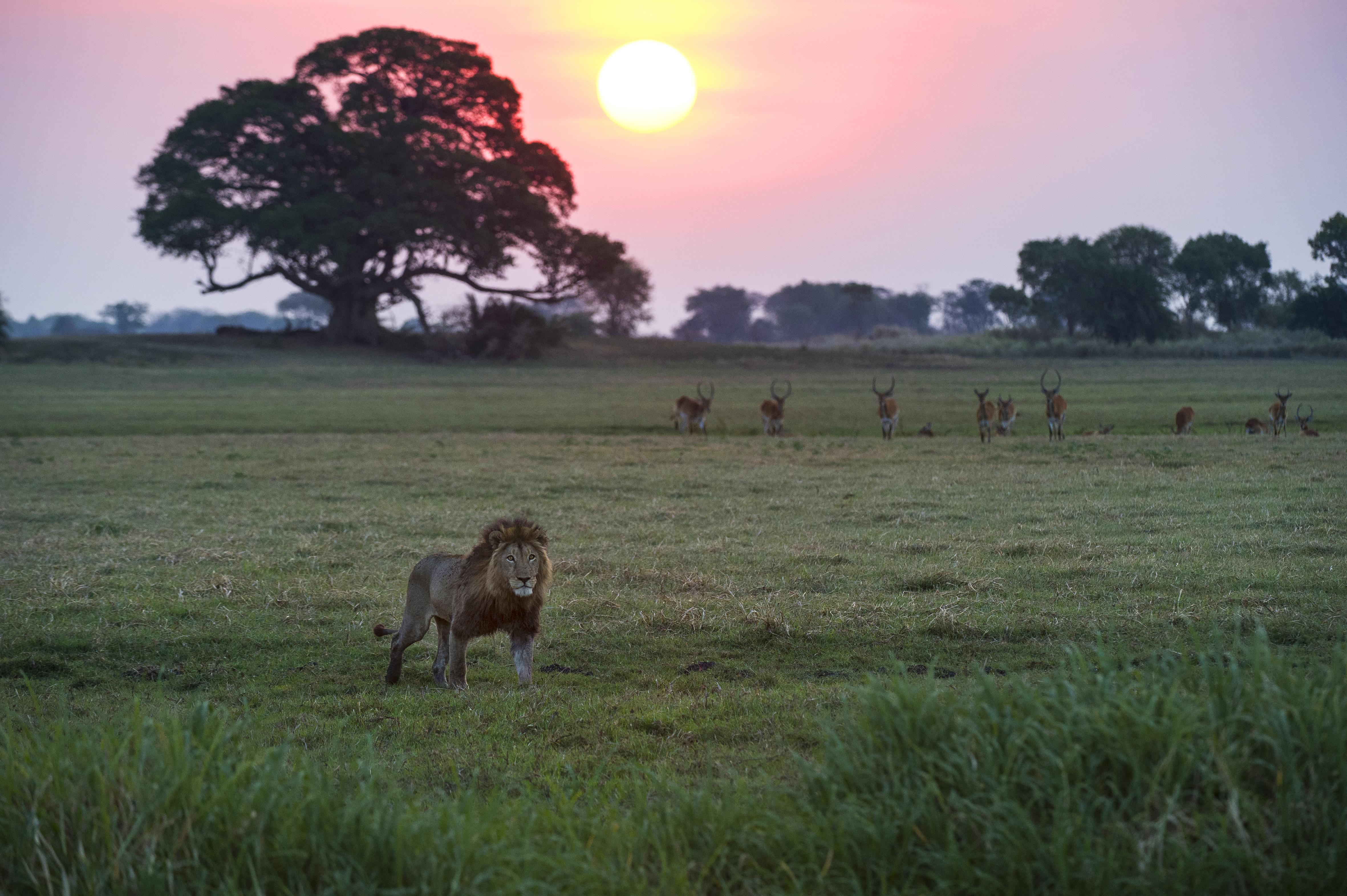 Shumba Camp Zambia Wildlife