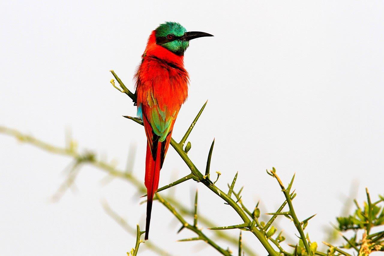 Mwiba Lodge Tanzania Wildlife