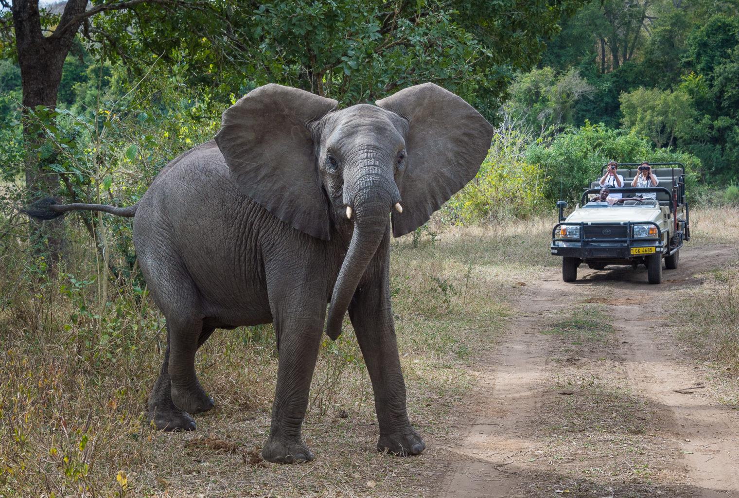 Mkulumadzi Malawi Elephant