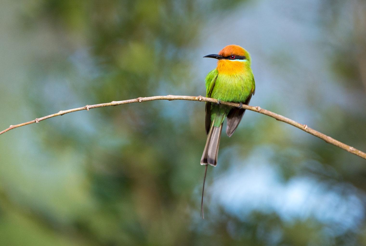 Mkulumadzi Malawi Bird