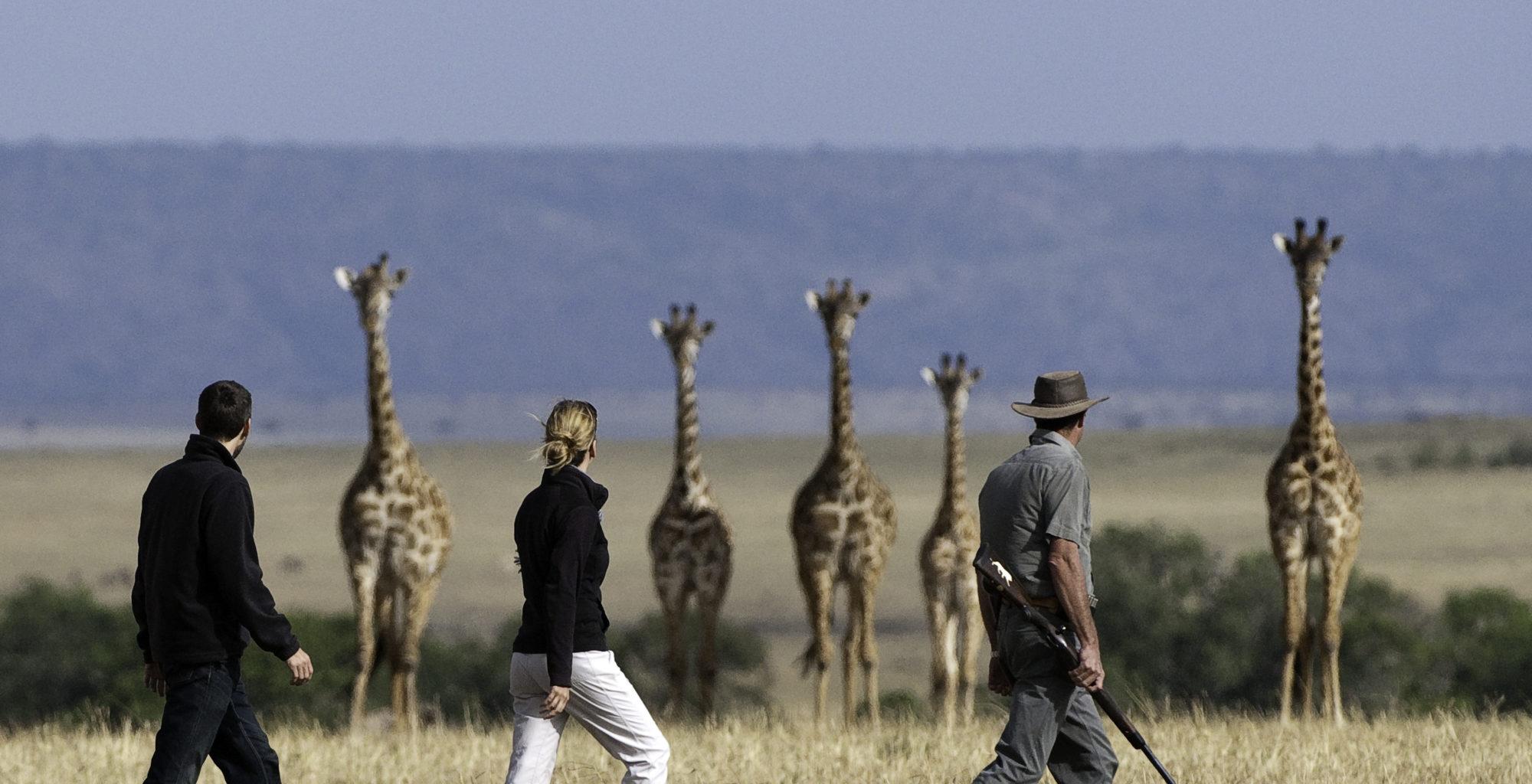 Mara-Plains-Camp Giraffe