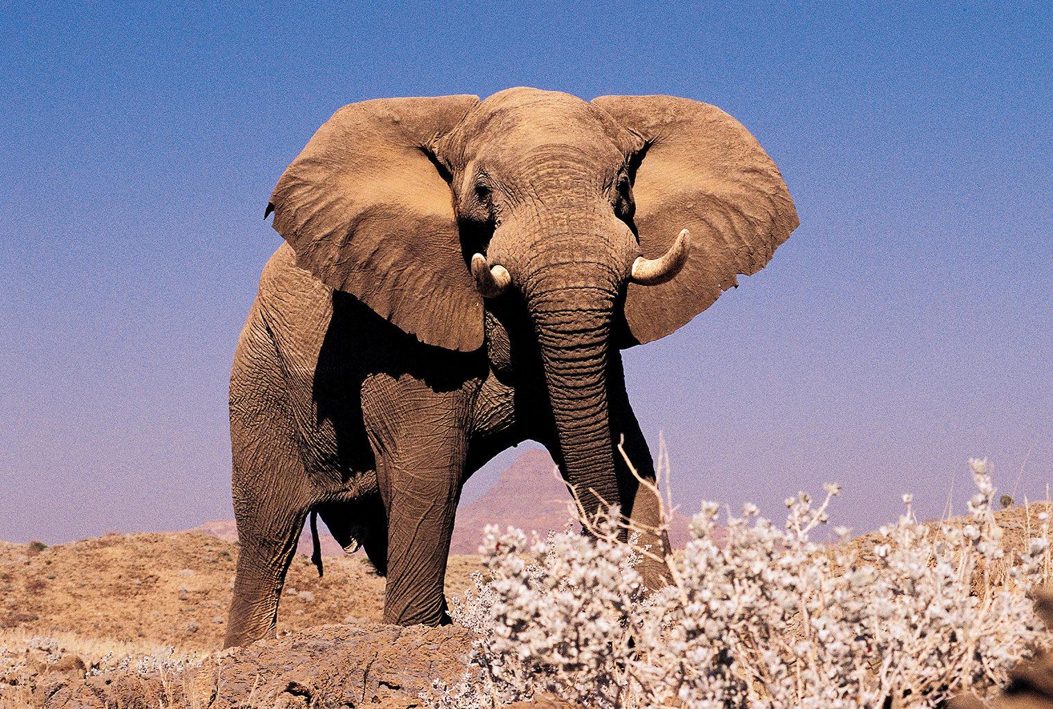 Mowani Mountain Camp, Namibia, Elephant