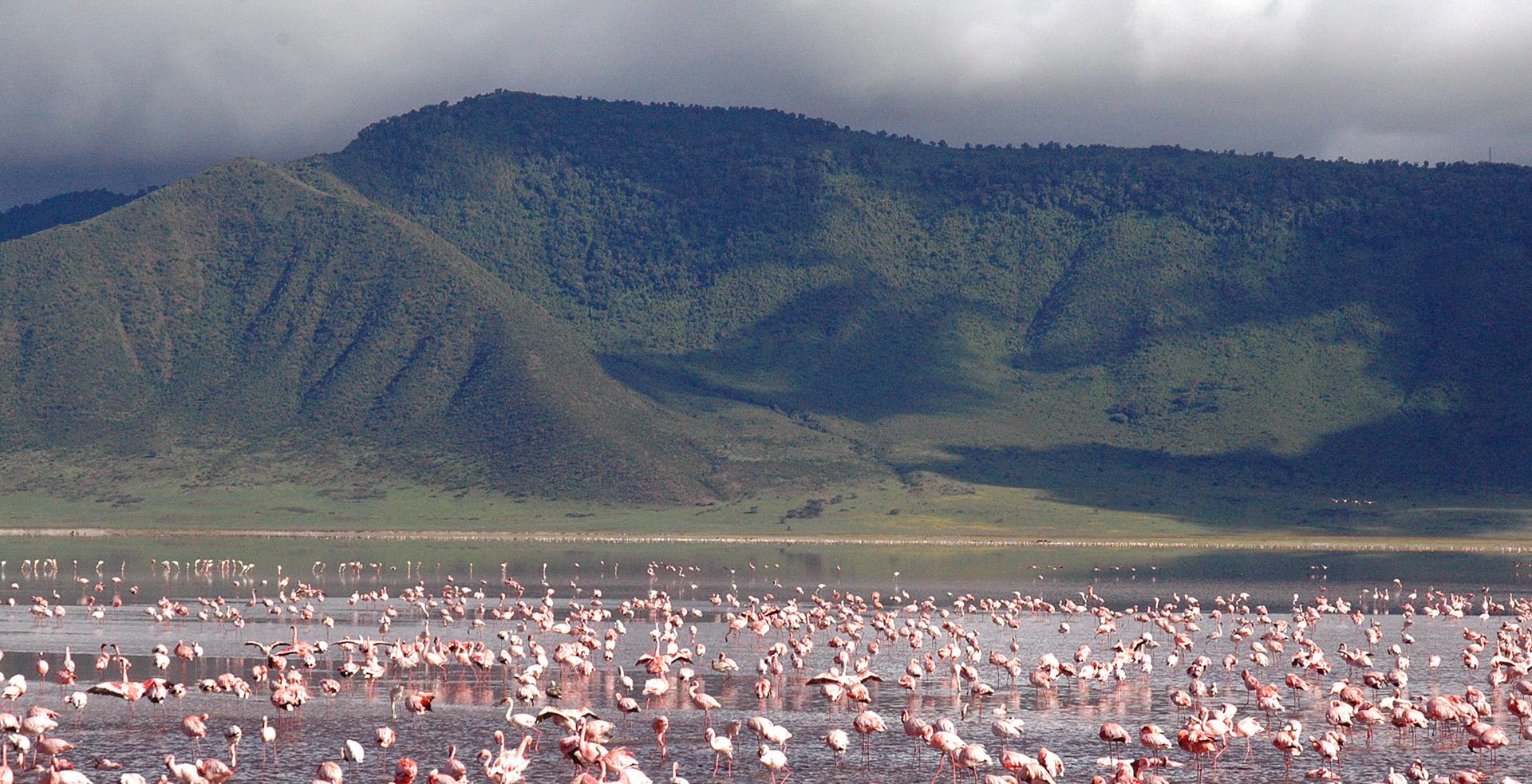 Ngorongoro Crater Lodge Wildlife