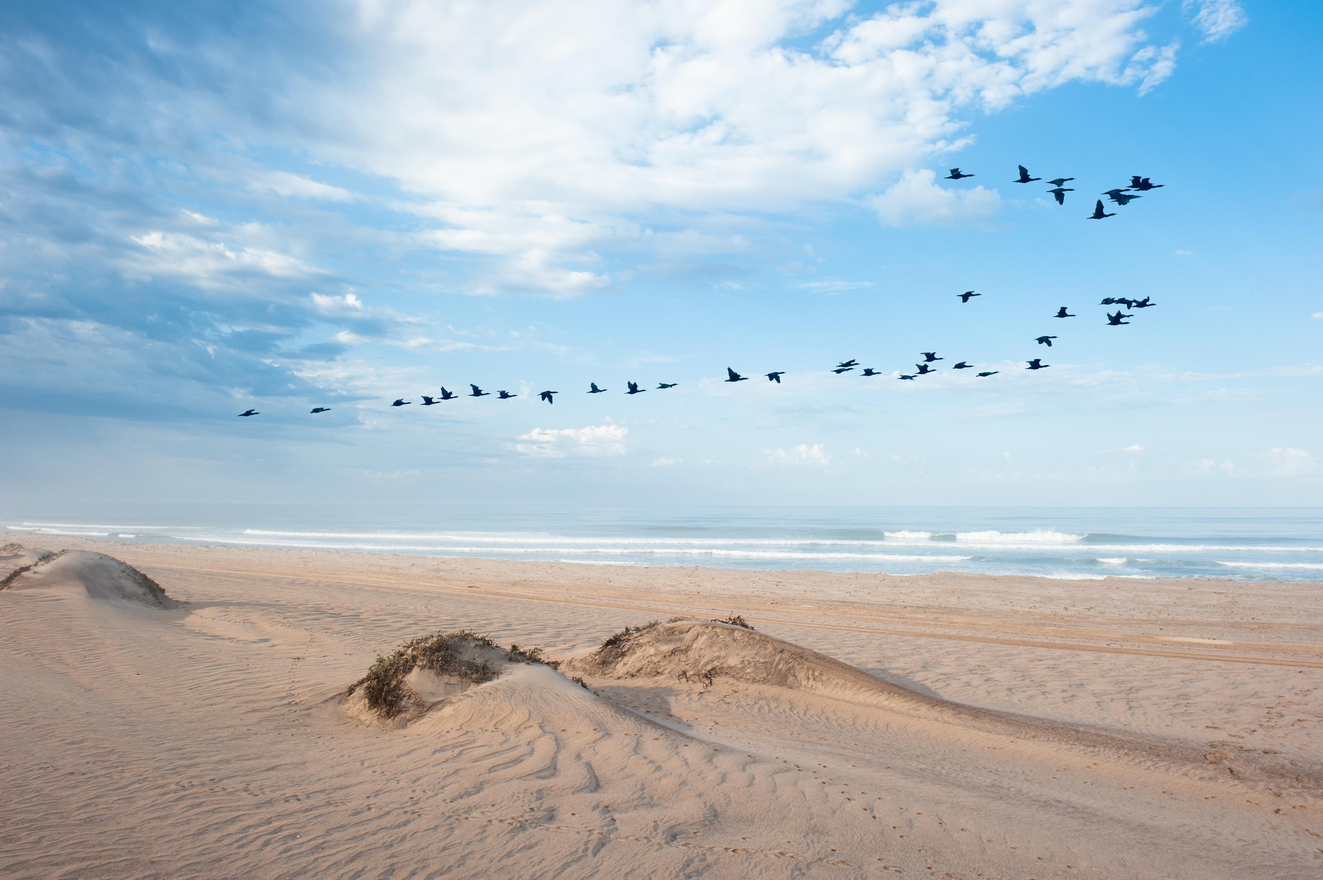 Hoanib Skeleton Coast Birds