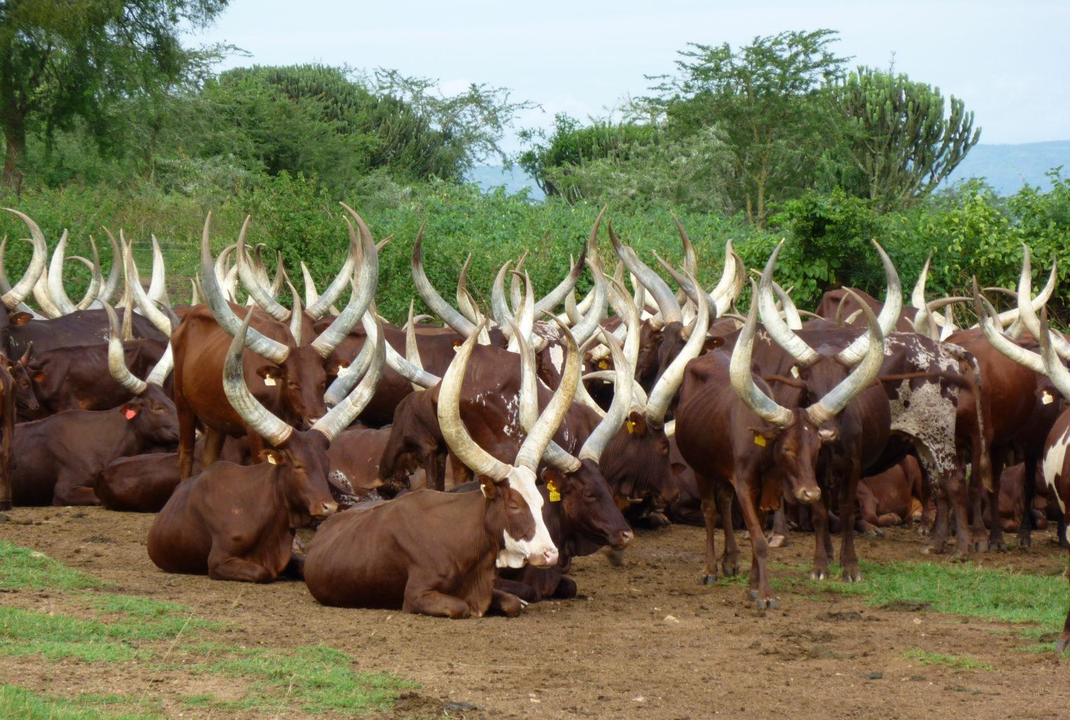 ihingo Lodge Uganda Wildlife