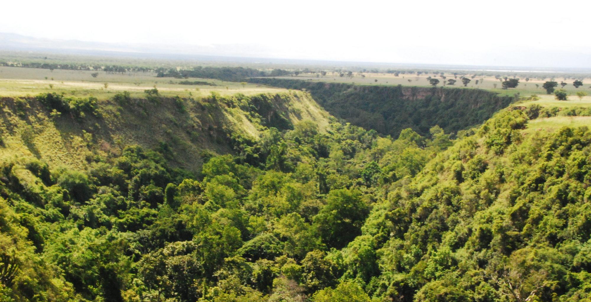 Queen Elizabeth Uganda Forest
