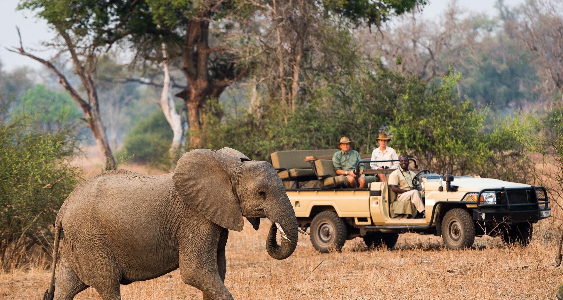 Nkwali Camp Zambia Elephant Safari