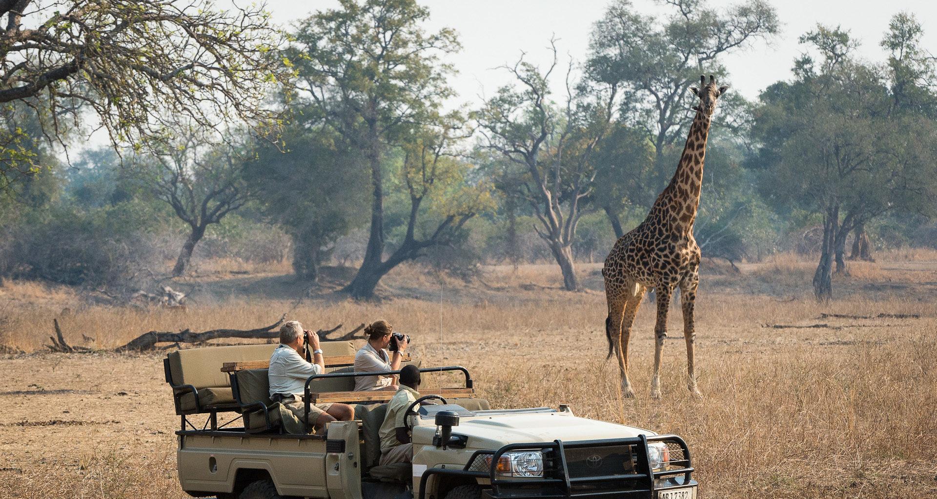 Robins-House-Zambia giraffe