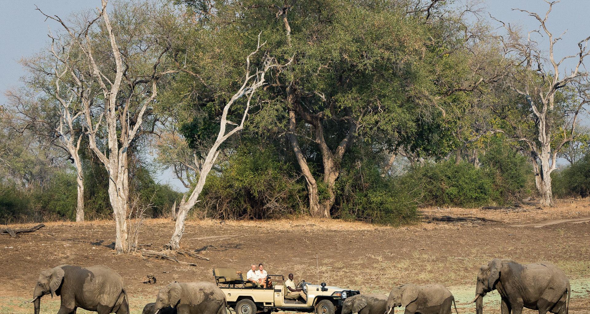 NsefuCamp-Zambia wildlife