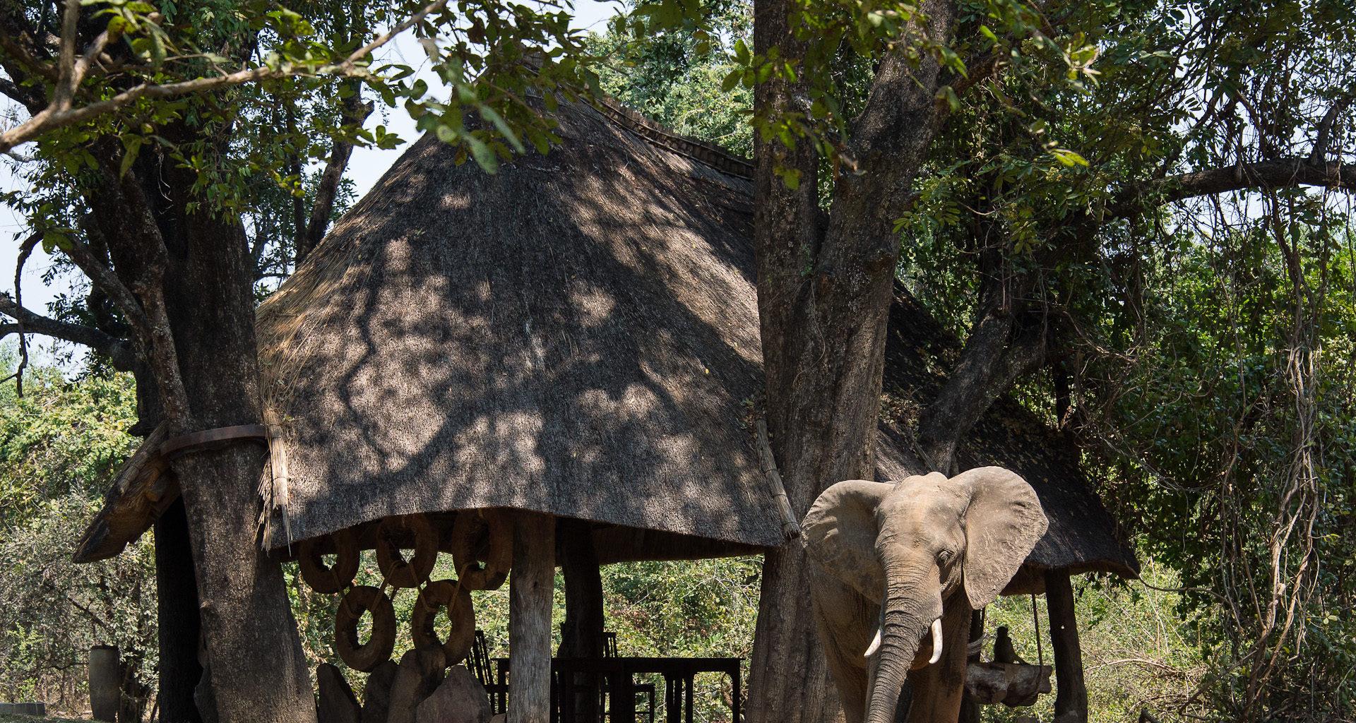 Nkwali Camp Zambia Exterior Elephant