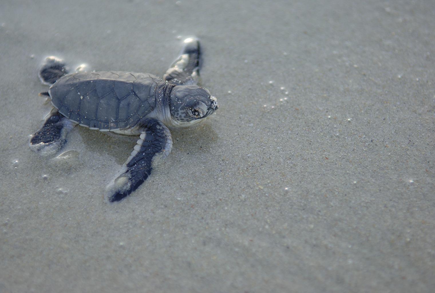 Ras-Kutani-Tanzania-Turtles