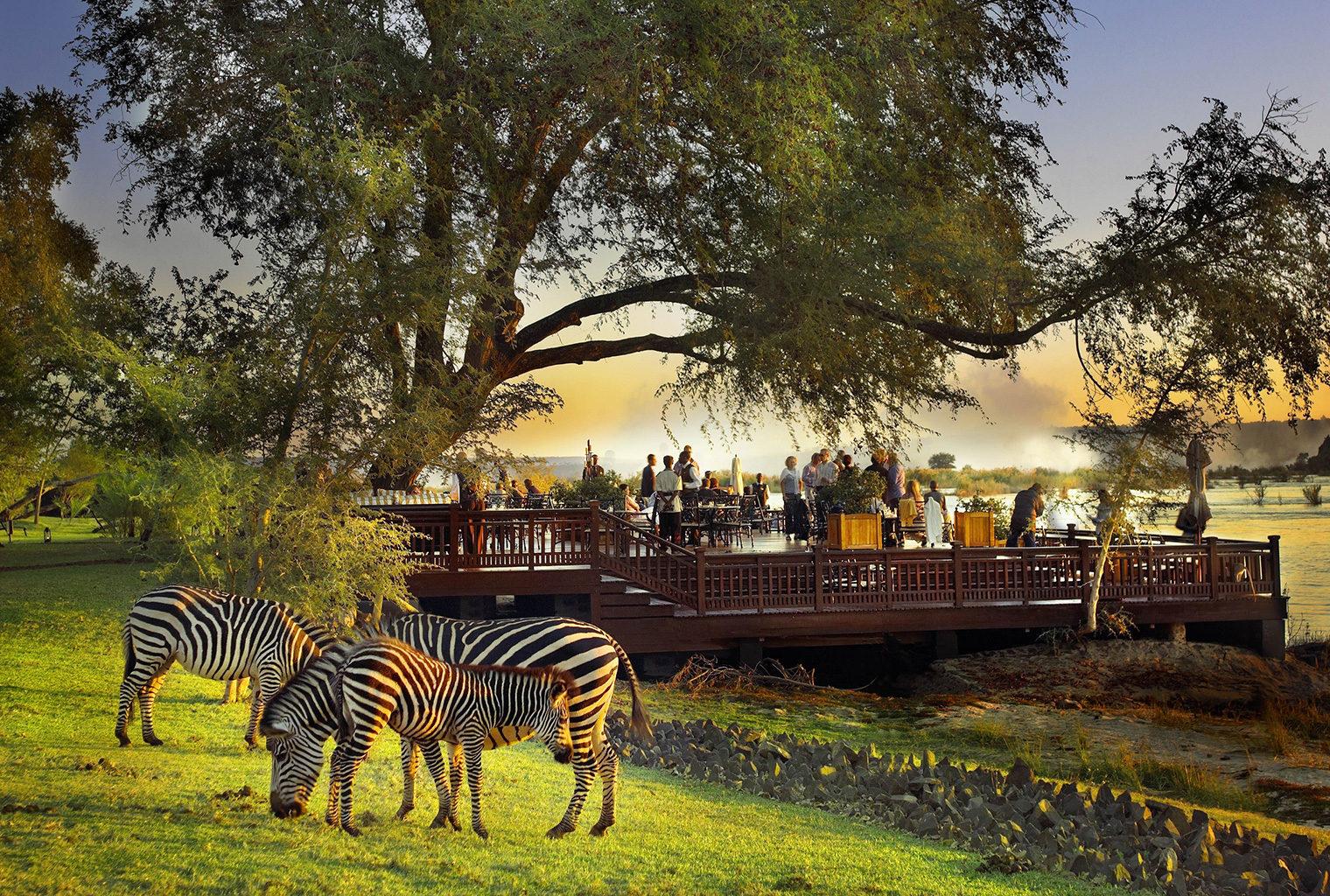 Royal Livingstone, Zambia, Deck, Zebras