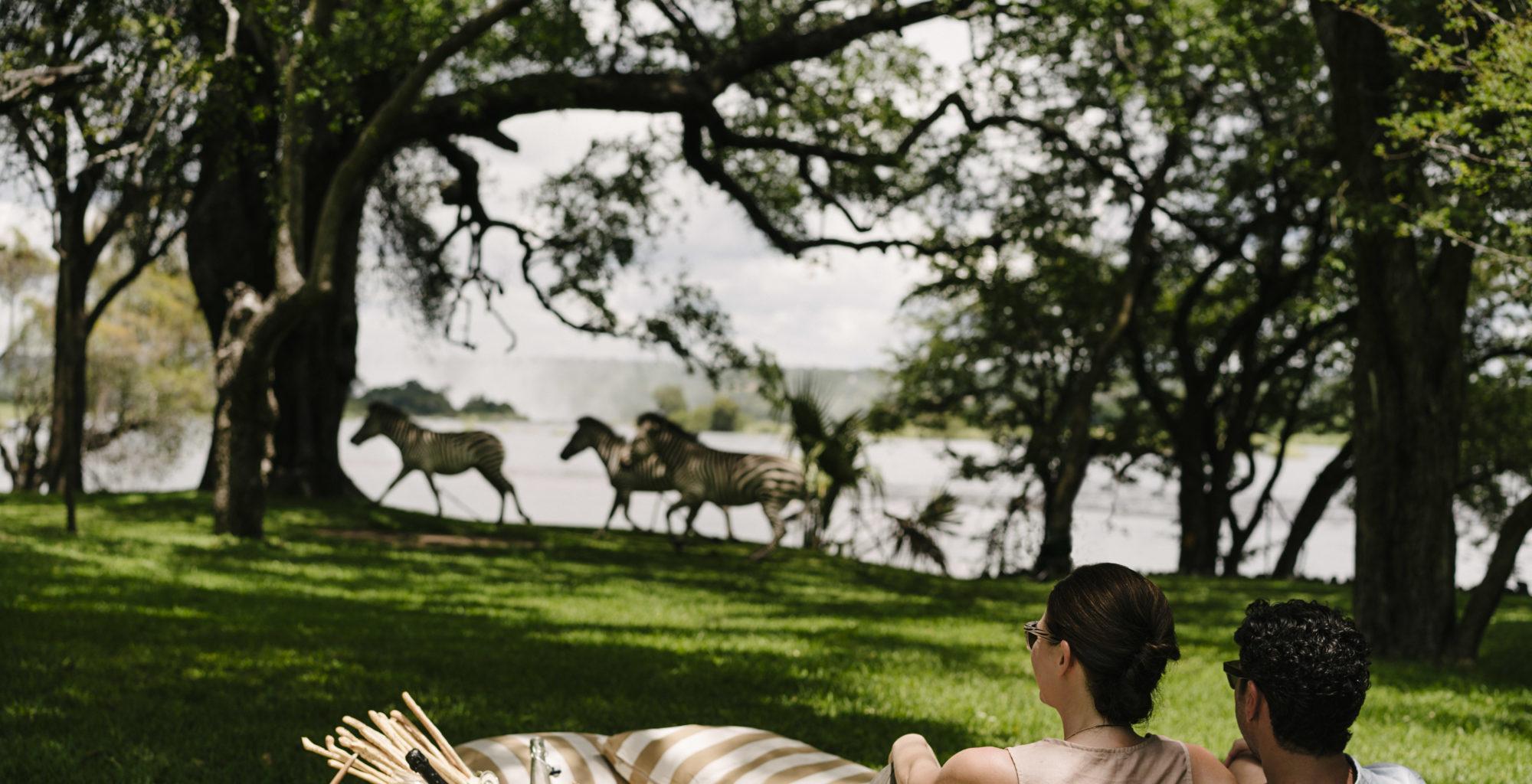 Royal Livingstone, Zambia, Picnic Zebras