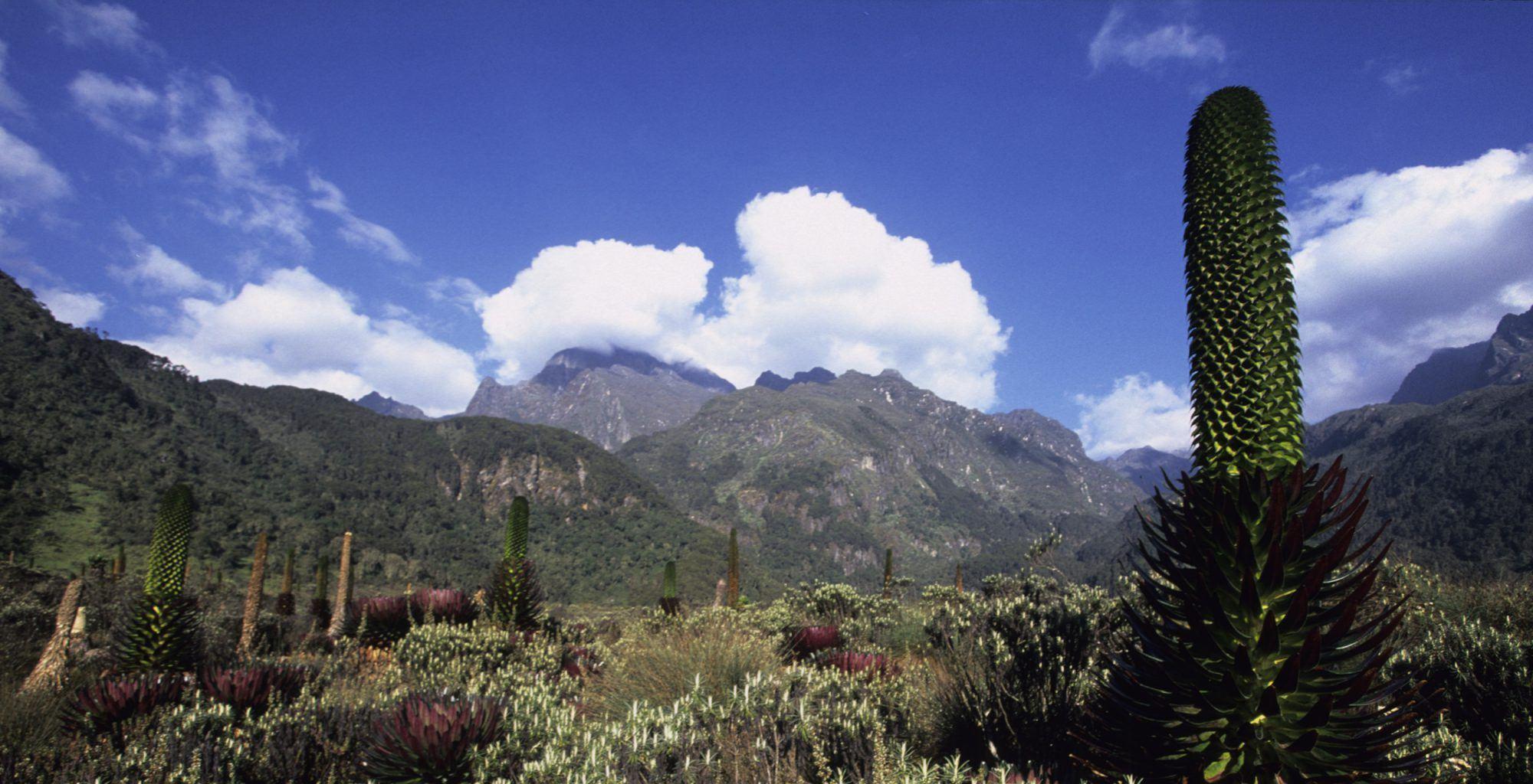 Uganda-Rwenzori-Mountains-Landscape