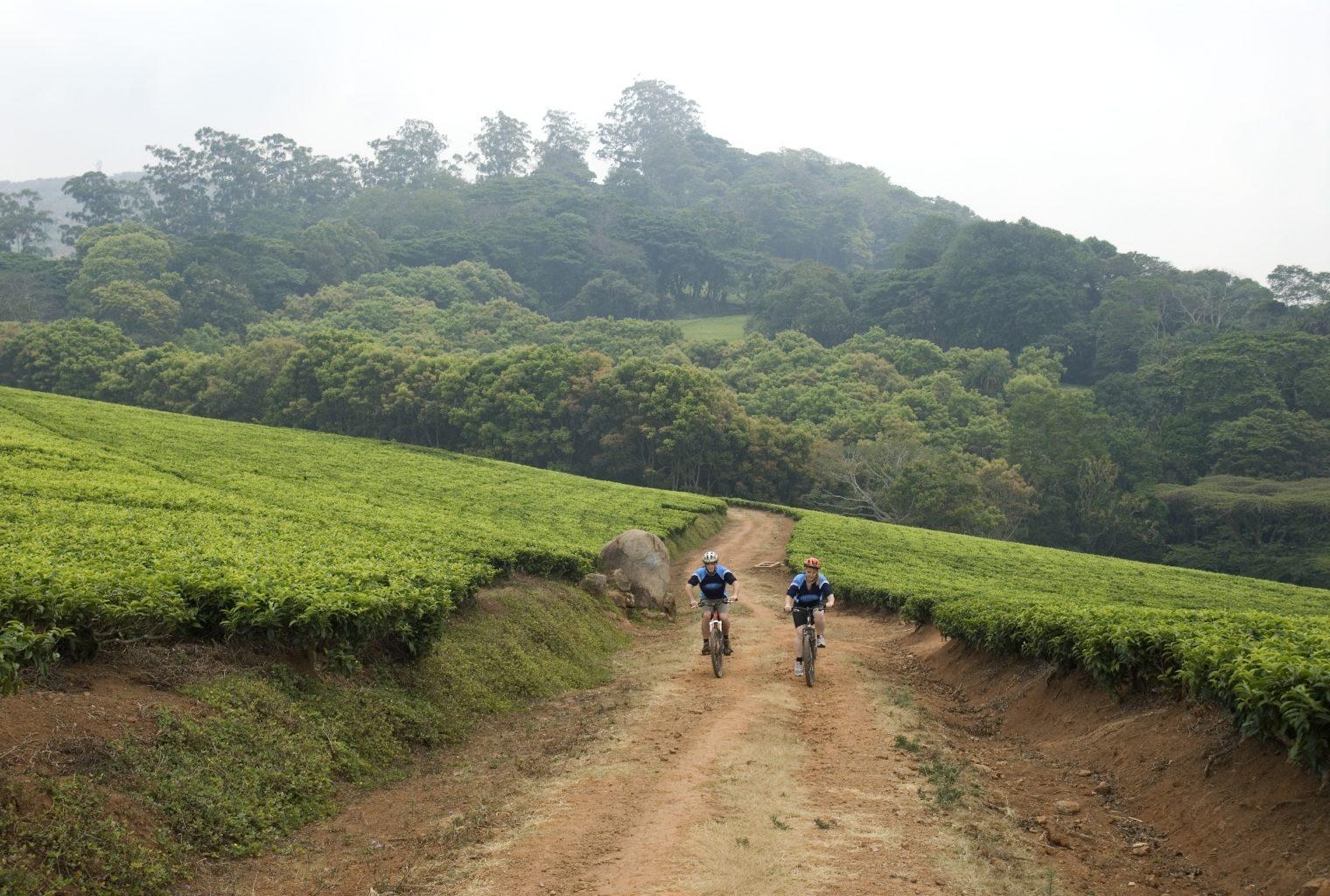 Satemwa Malawi Activity