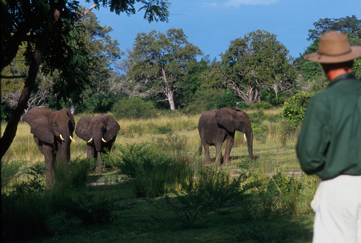 Selous Walking Safari Tanzania Elephants