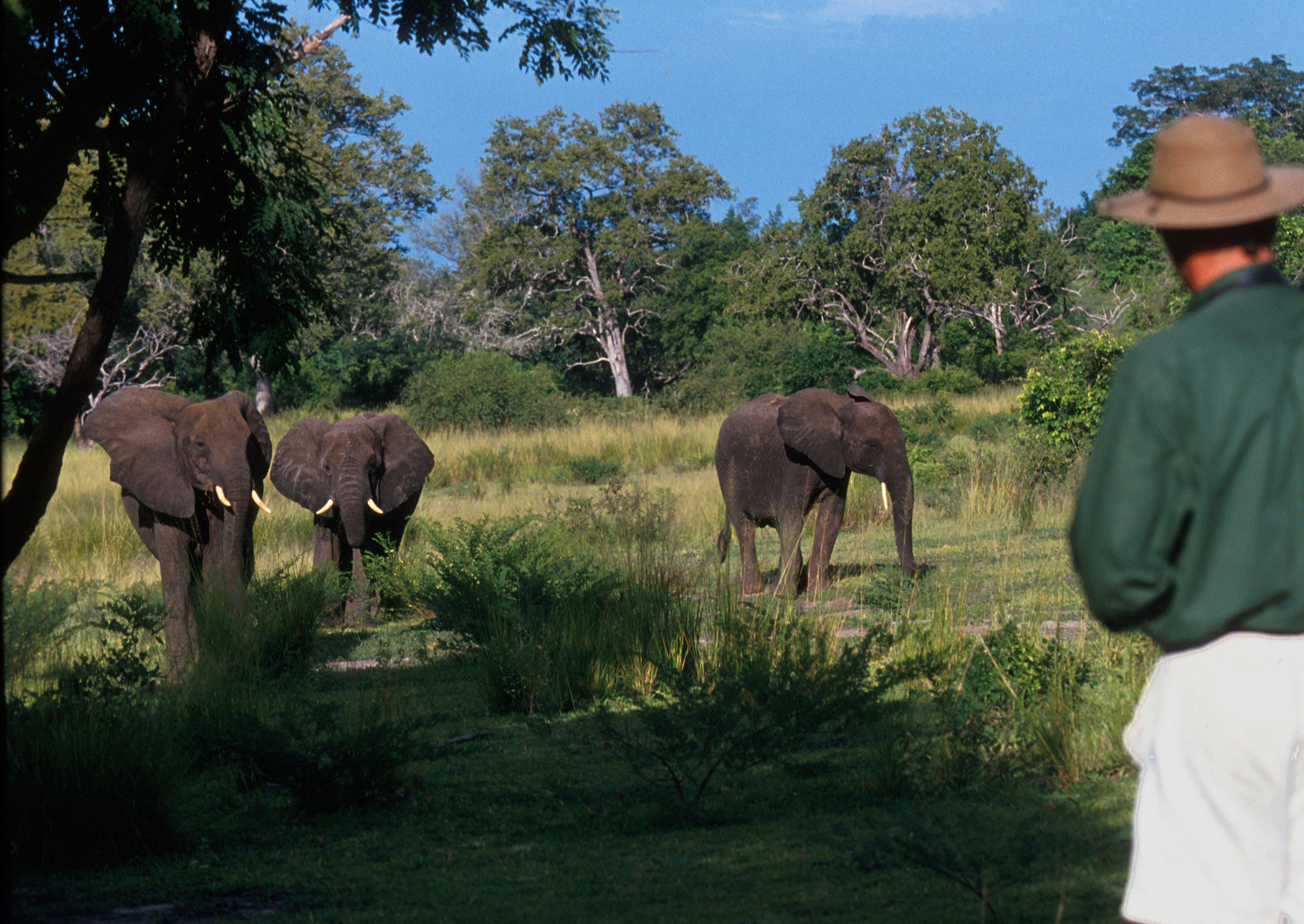 Selous Walking Safari Tanzania Elephants
