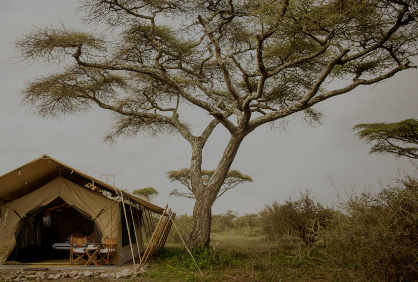 SerengetiSafariCamp-Hero-Tanzania-Tinted