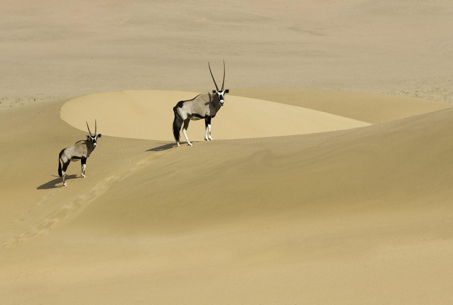 Serra Cafema Camp Namibia Wildlife