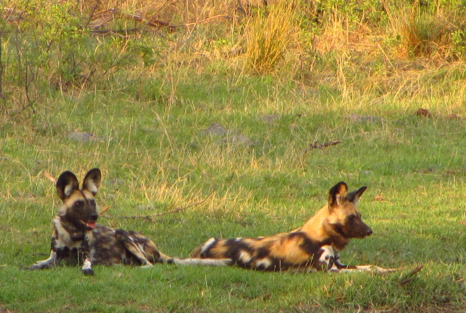 Susuwe Island Namibia Deck Animal
