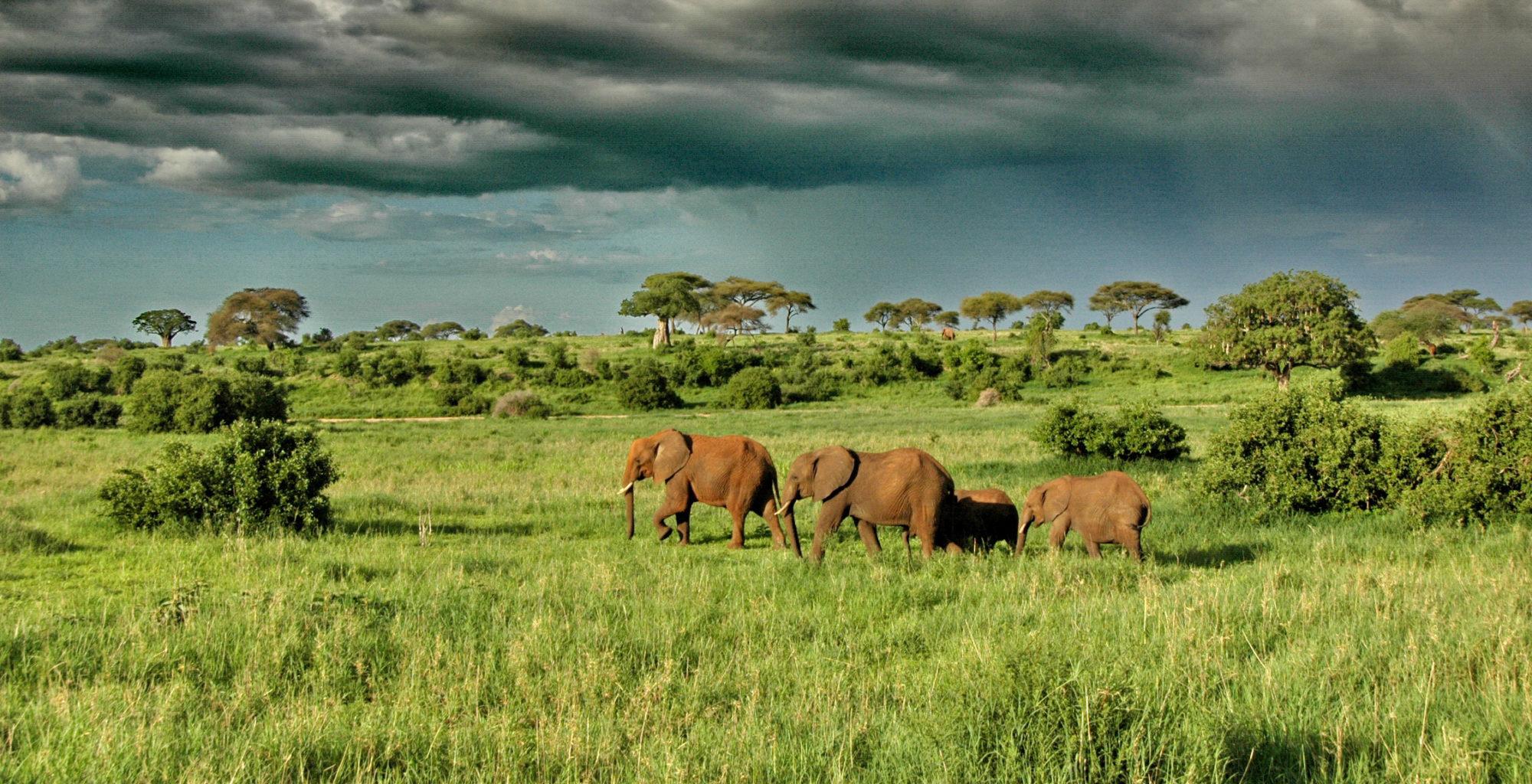 Tanzania-Tarangire-Elephant