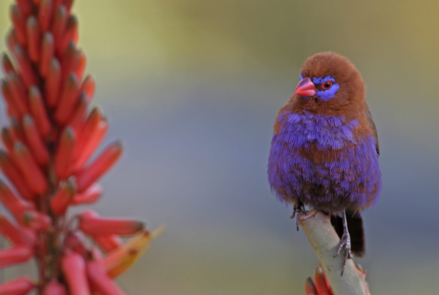 Samatian Island Lodge Kenya Bird