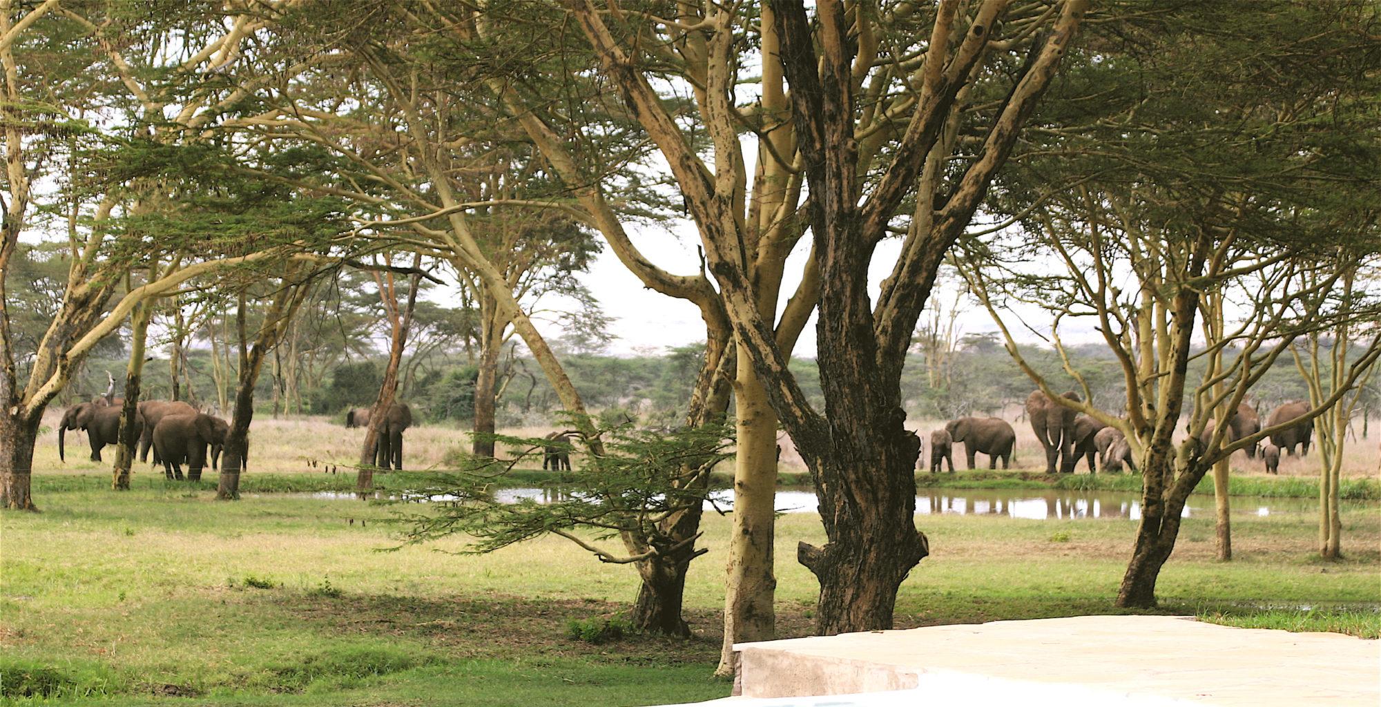 Sirikoi-Willys-Camp-Kenya-Pool
