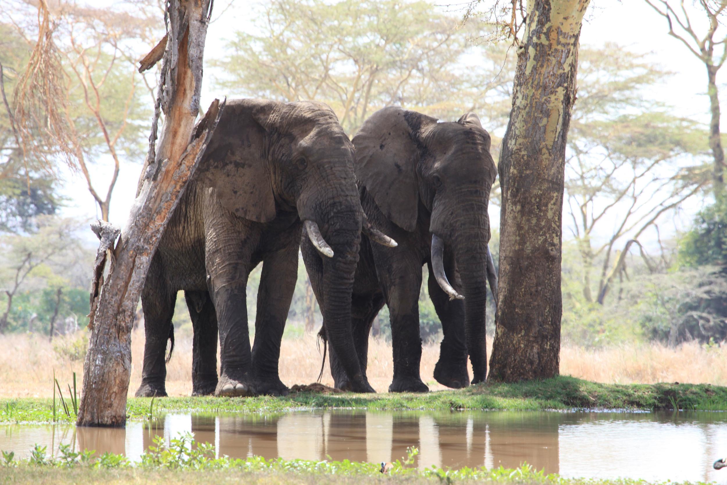 Sirikoi-Willys-Camp-Kenya Wildlife