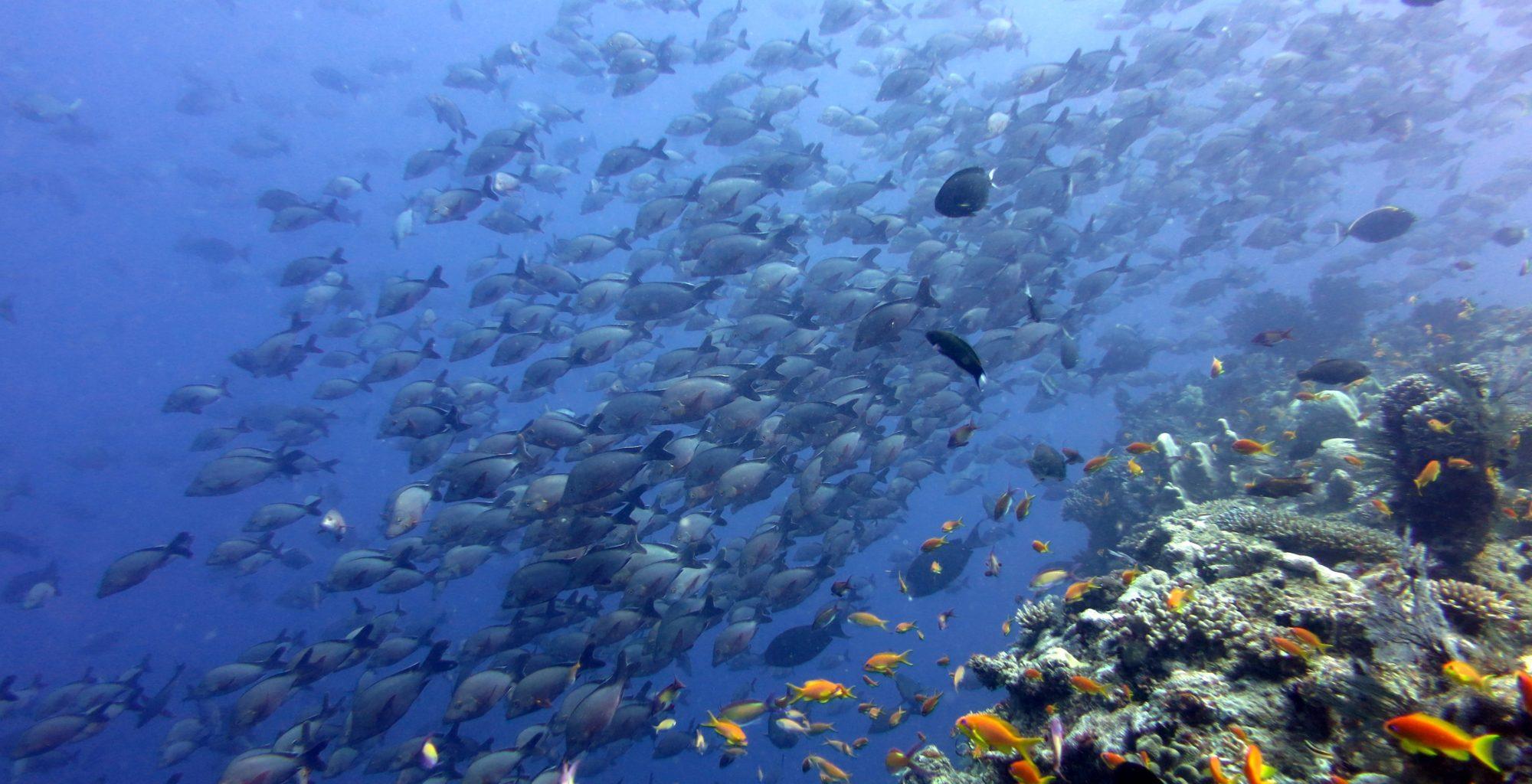 Mozambique-Quirimbas-Vamizi-Lodge-Scuba-Diving