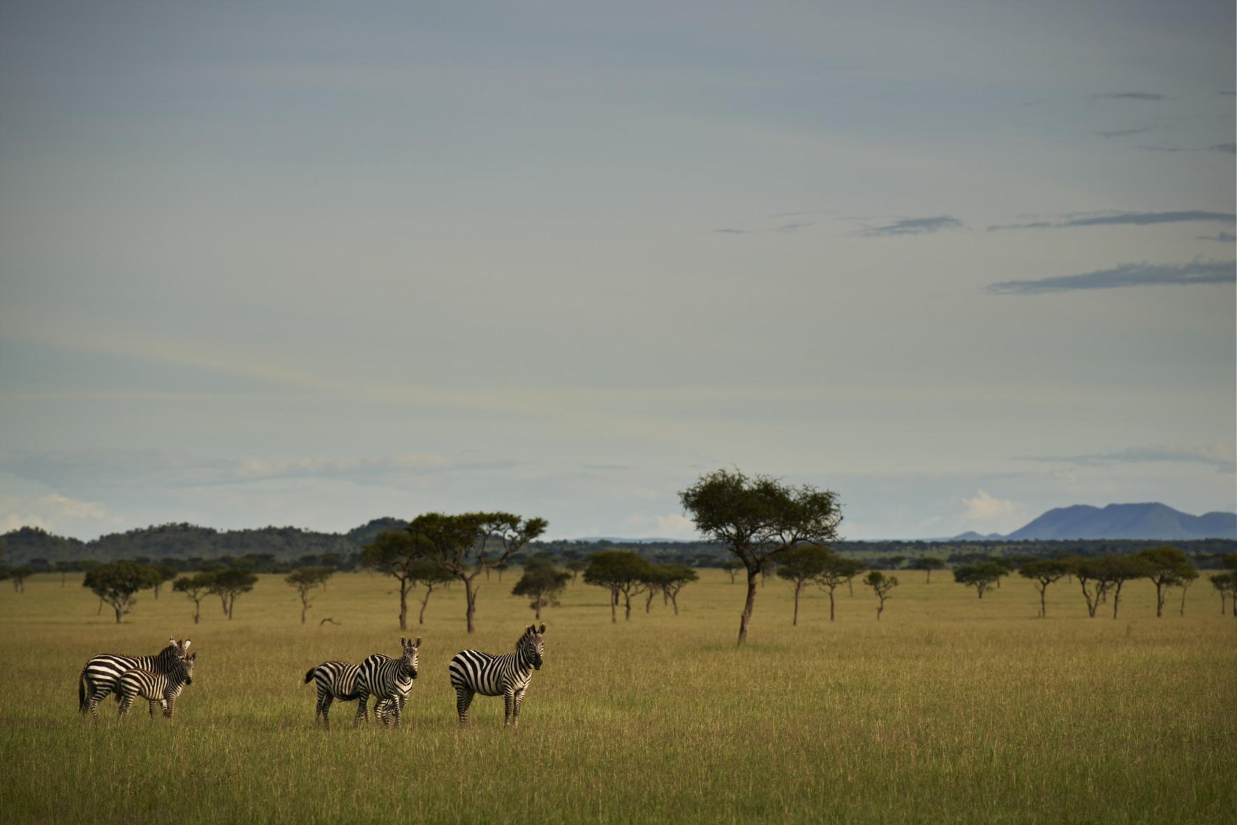 Singita Serengeti Tanzania Wildlife