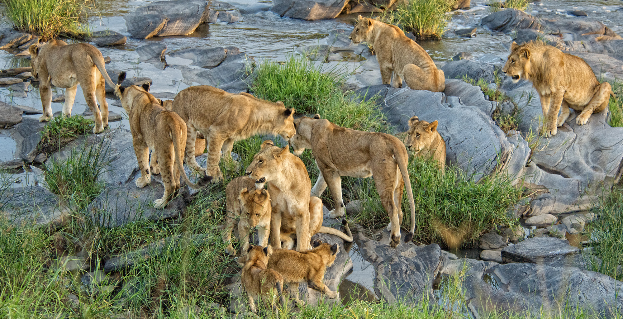 Kenya-Rekero-Tent-Camp-Lions