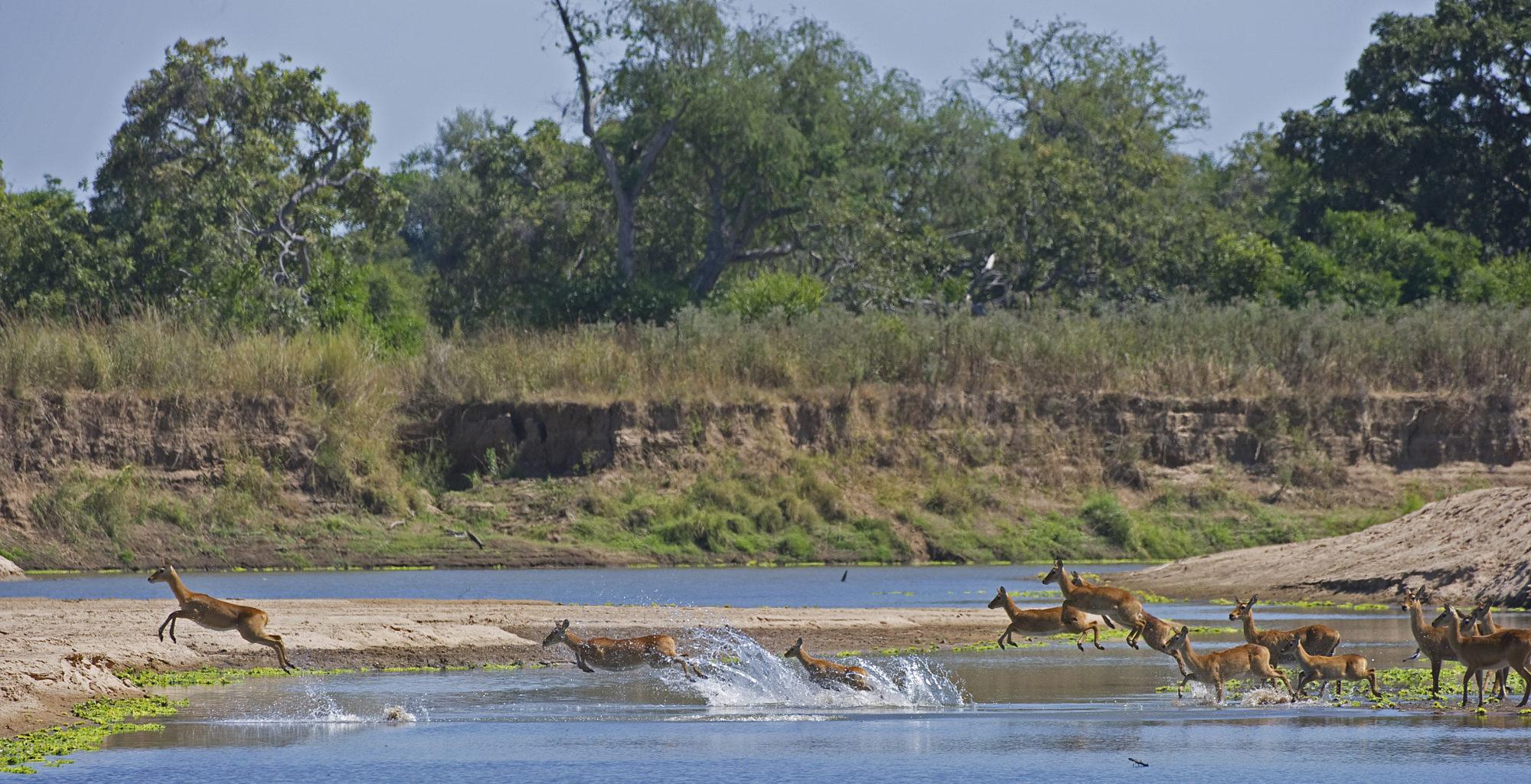 Puku-Ridge-Camp-Zambia-wildlife