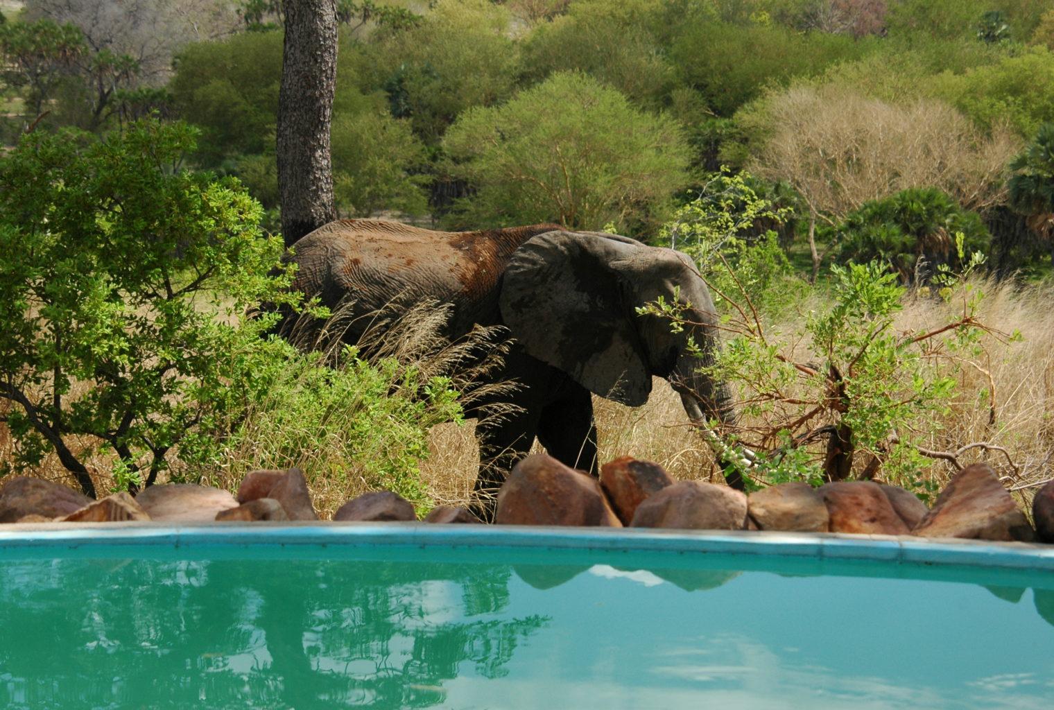 Beho Beho Tanzania Pool Elephant