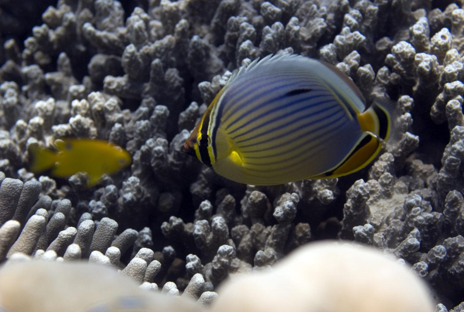 Chumbe Island Lodge Tanzania Fish