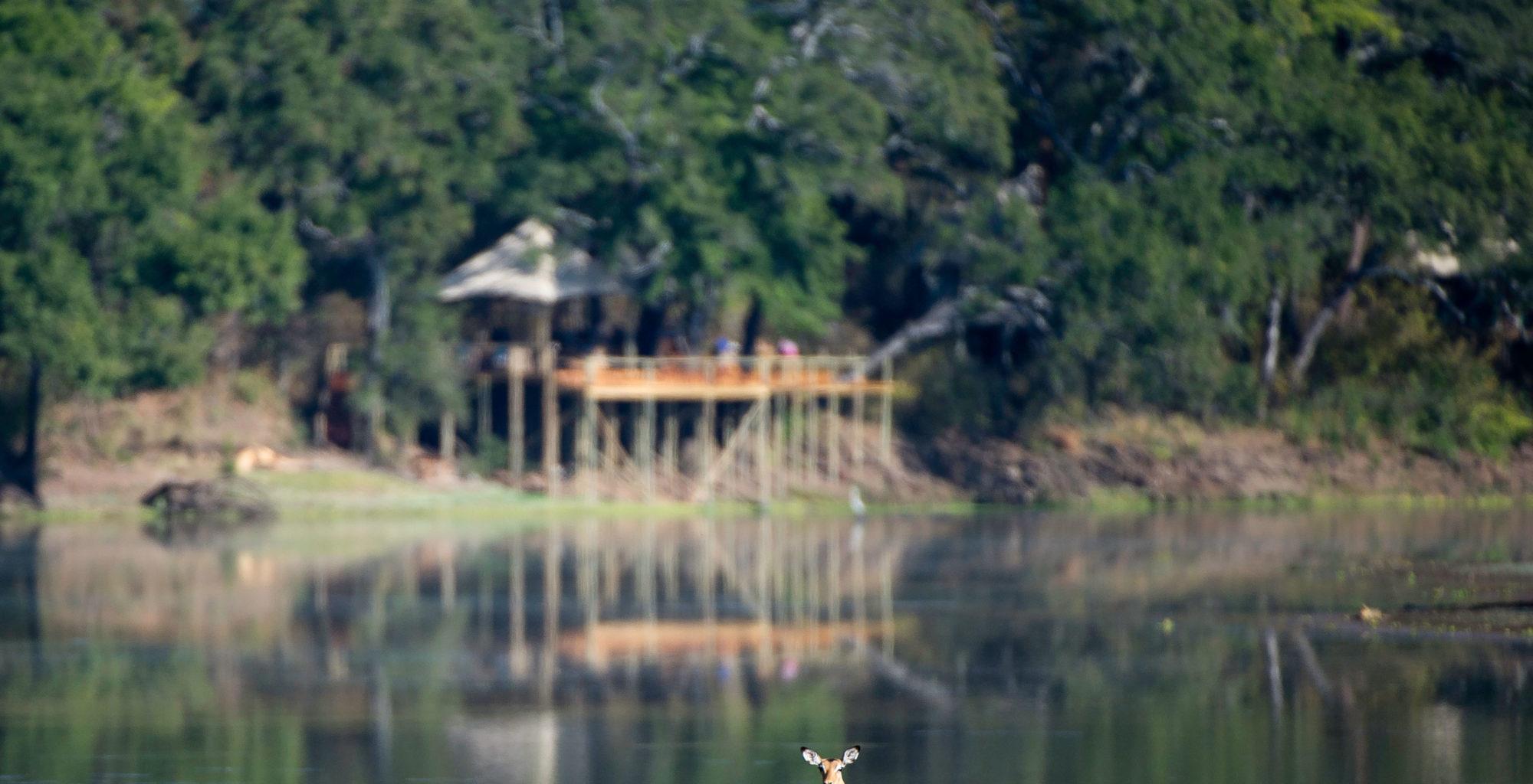 Chindeni Camp Zambia Wildlife