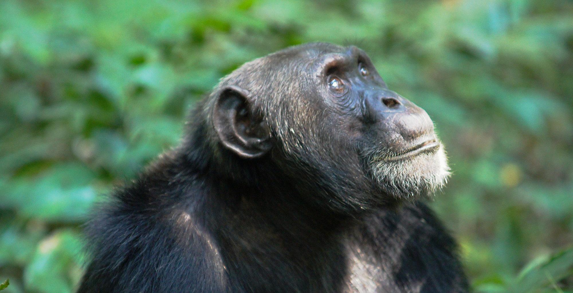 Uganda-Kibale-Wildlife