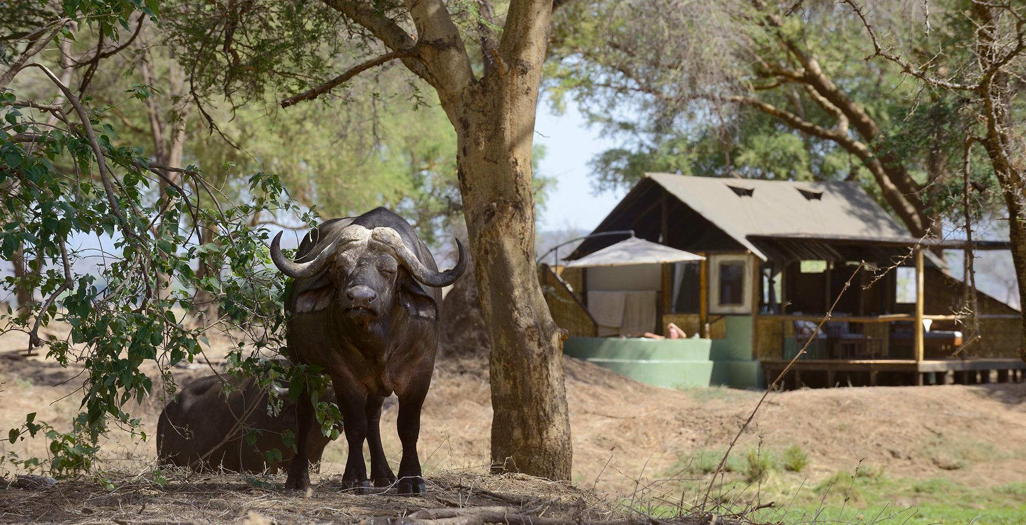 Zambia-Old-Mondoro-Exterior-Buffalo