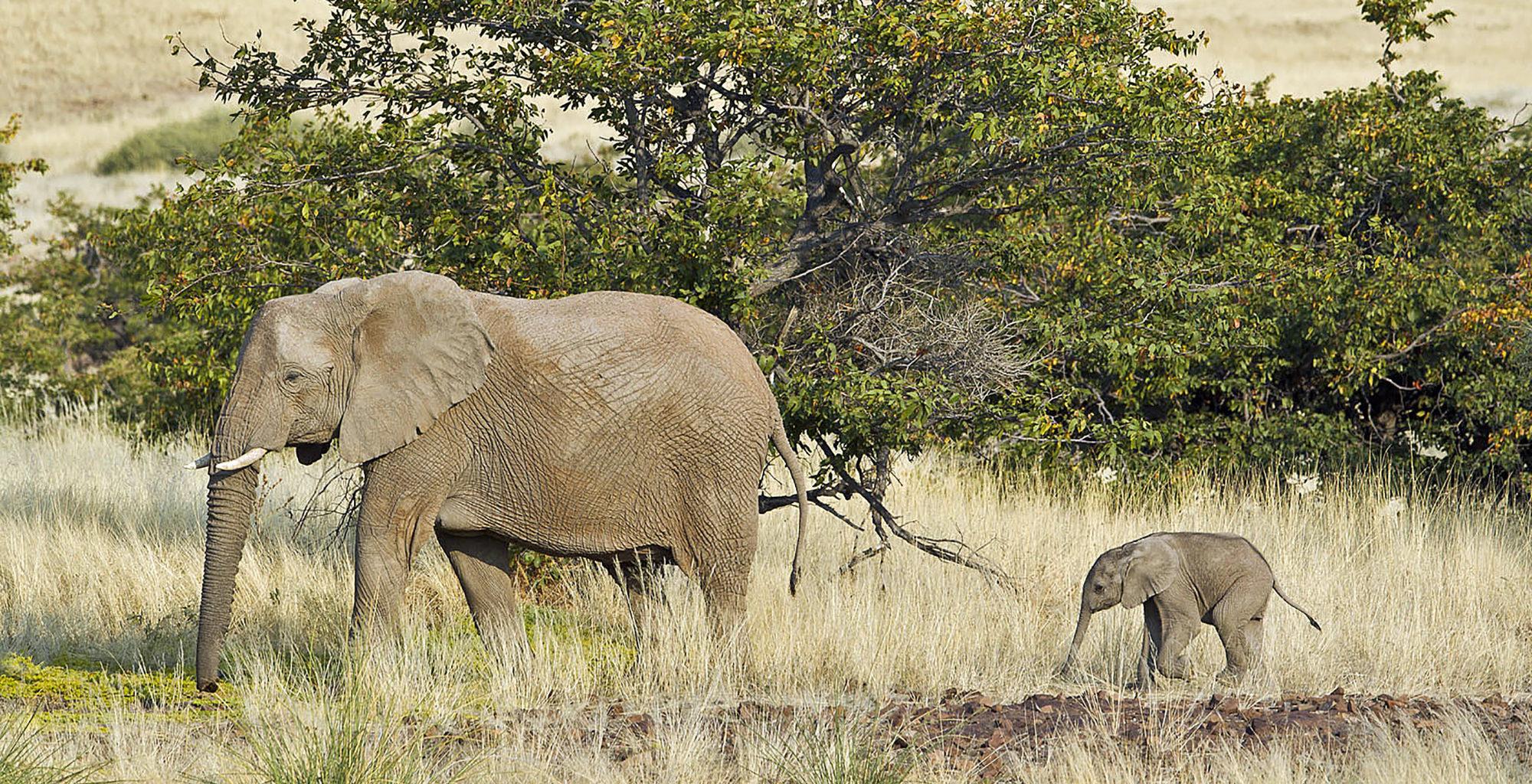 Namibia-Desert-Rhino-Camp-Elephants