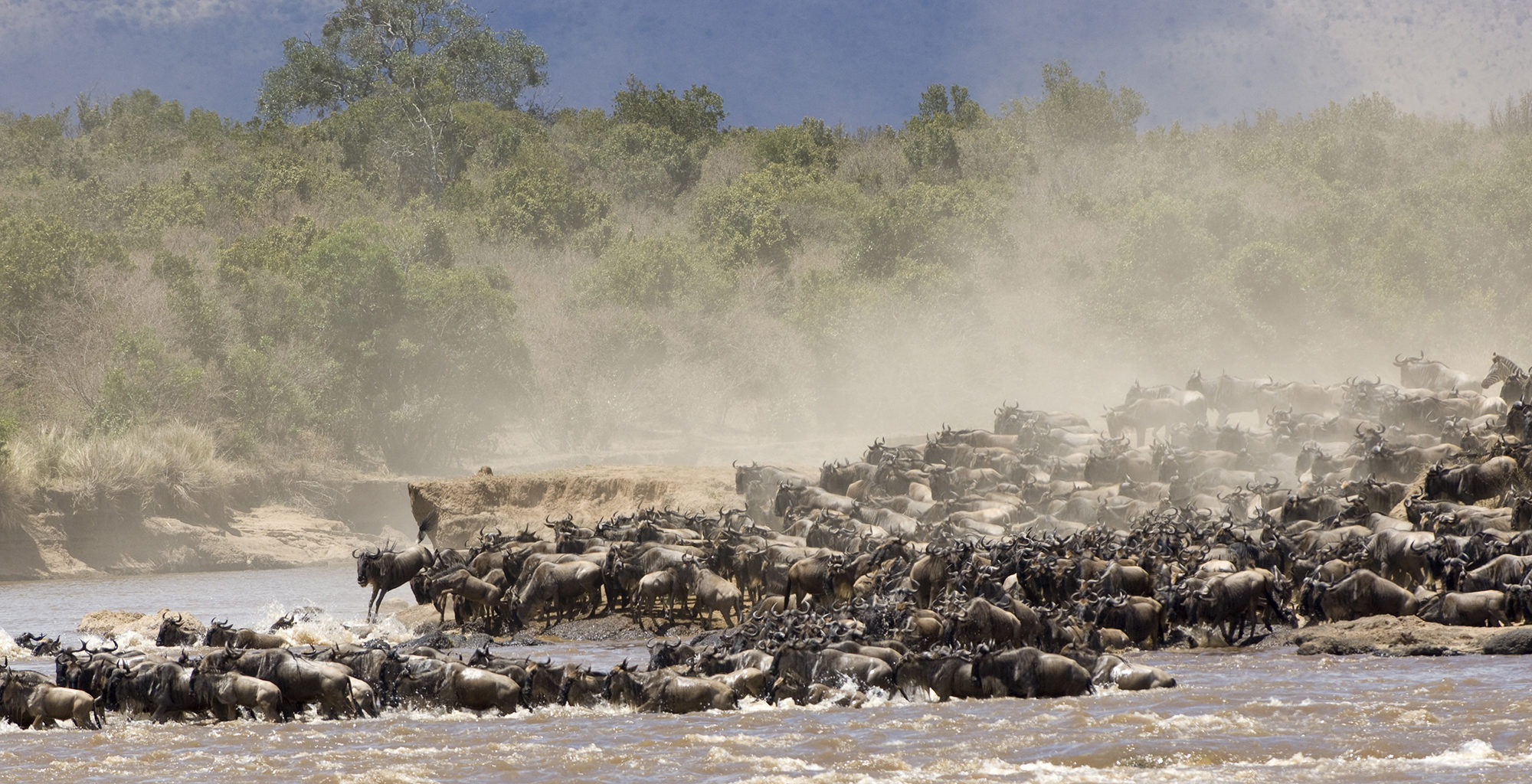 Tanzania-Serengeti-National-Park-Buffalo-Migration