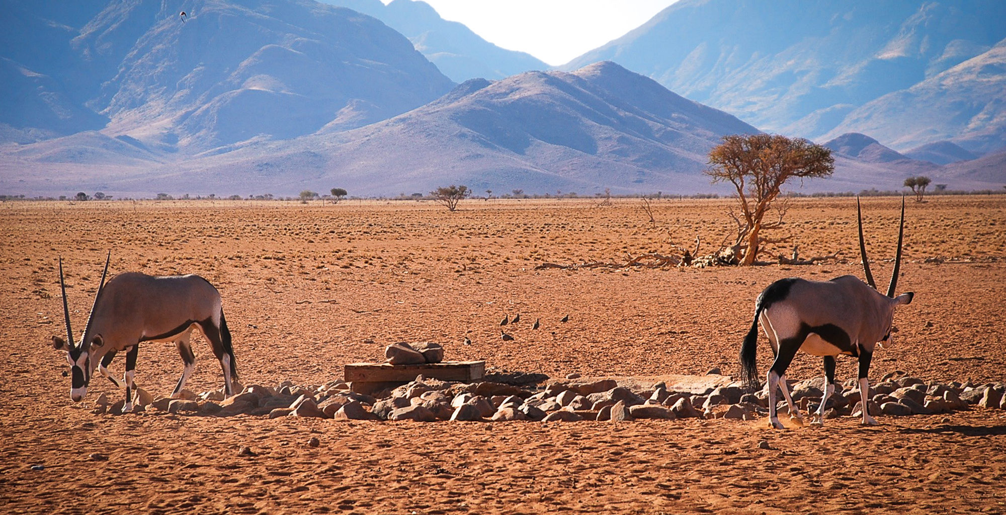 Namibia-Wolwedans-Private-Camp-Wildlife
