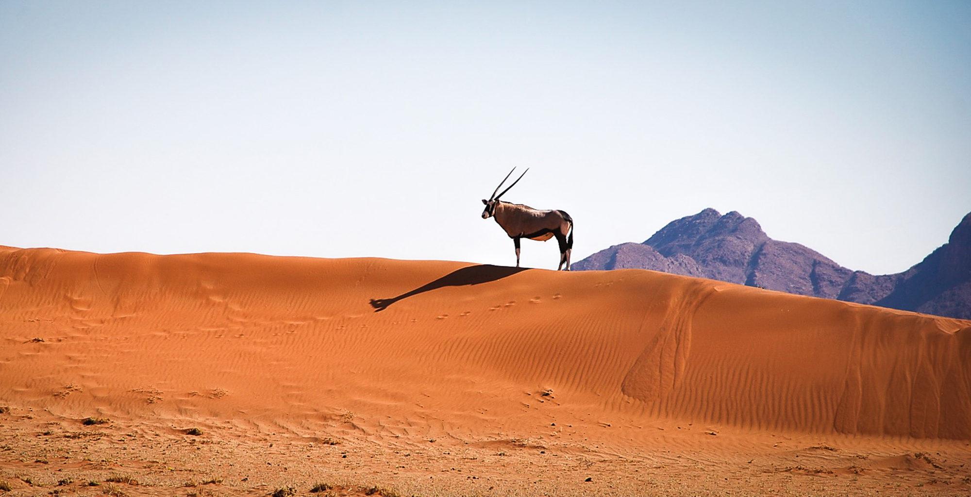 Namibia-NamibRand-Reserve-Wildlife-Oryx
