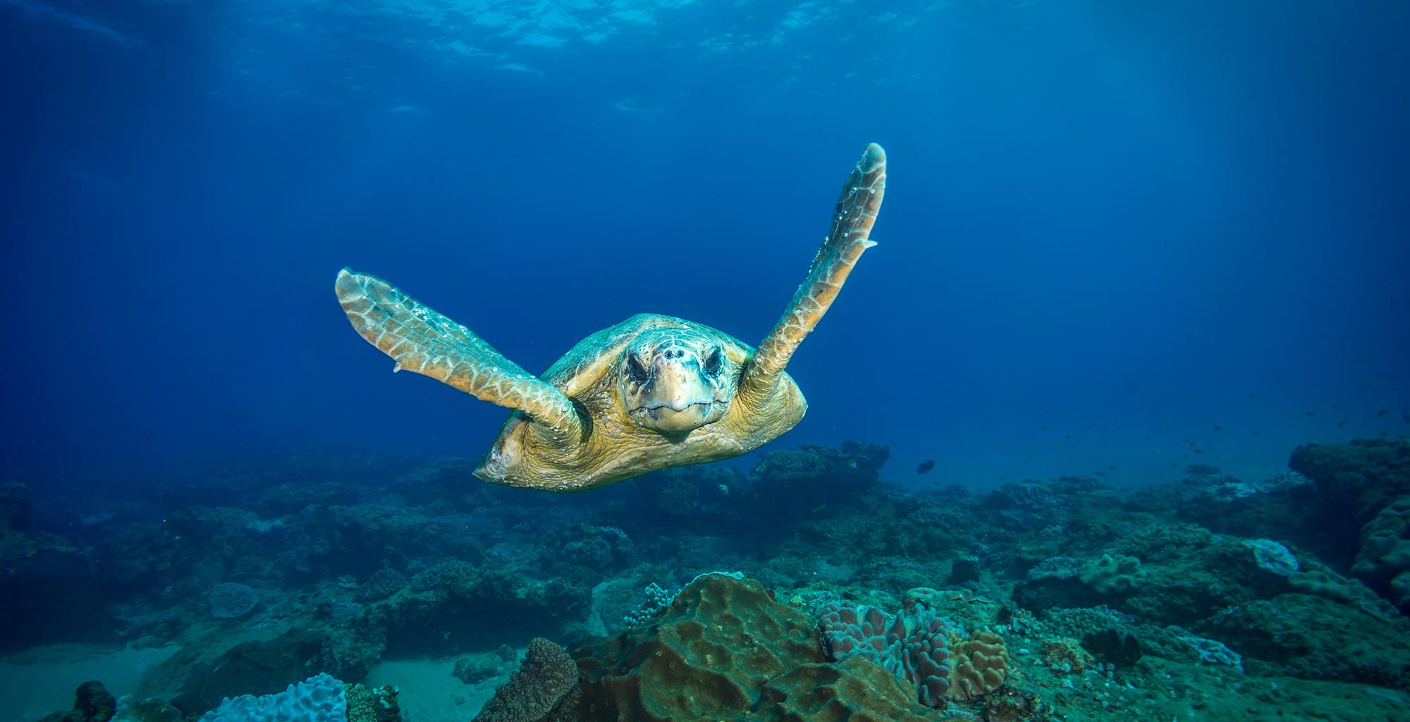 Mozambique-Maputo-Inhambane-White-Pearl-Resort-Sealife-Turtle