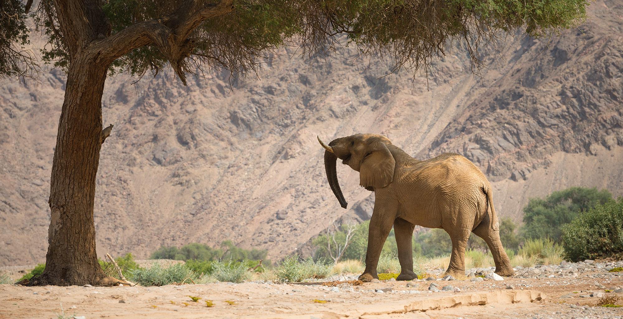 Namibia-Kaokoland-Wildlife-Elephant