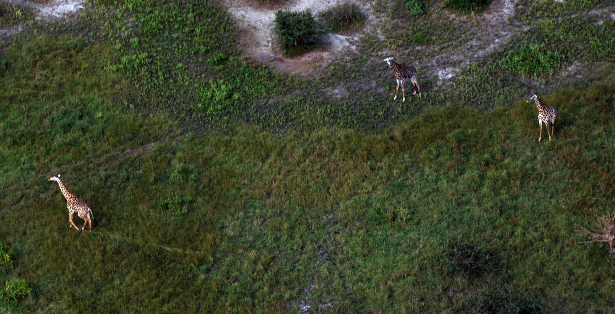 Tanzania-Mainland-Coast-Giraffe