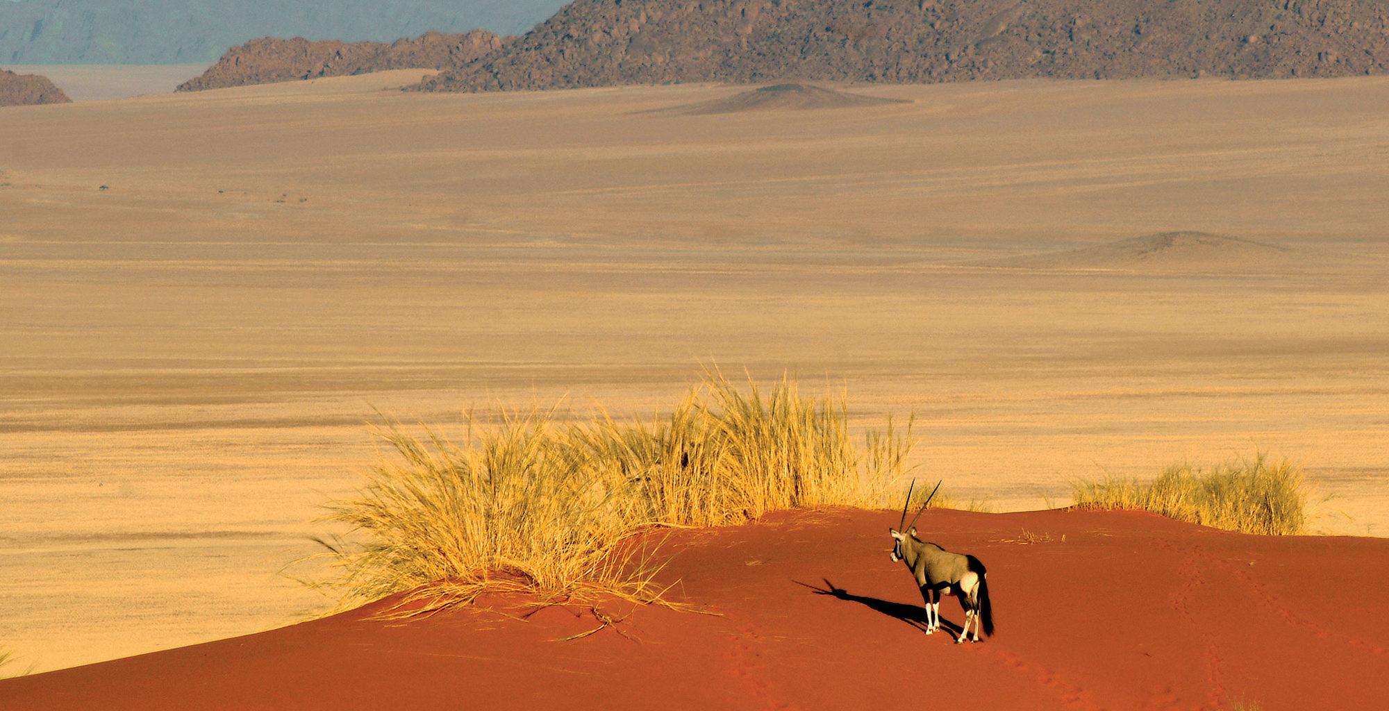 Namibia-NamibRand-Reserve-Oryx-Landscape