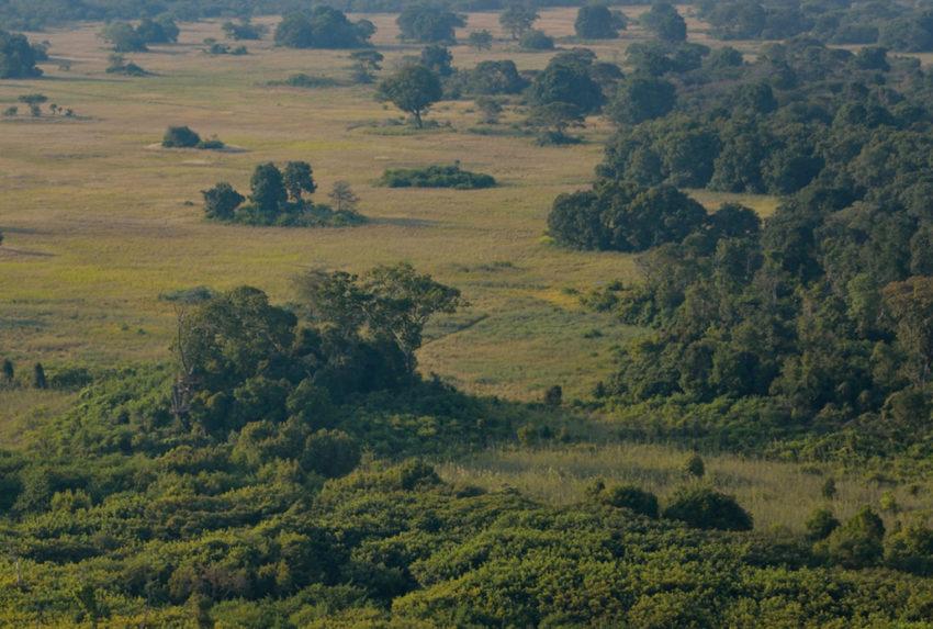 Zambia-Kasanka-National-Park-Landscape