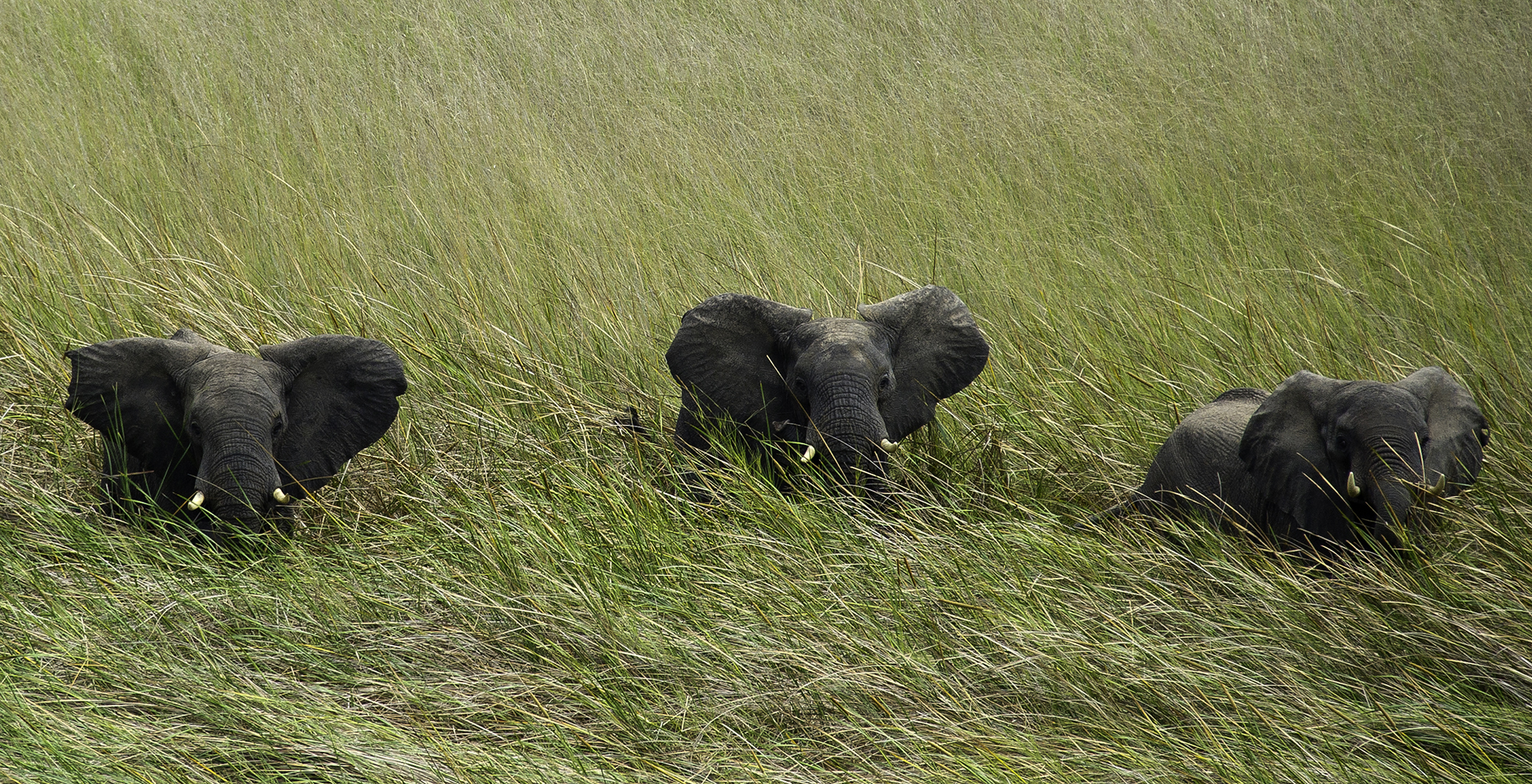 Zambia-Busanga-Bush-Camp-Wildlife-Elephant